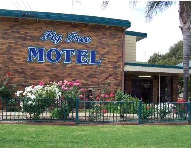 Fig Tree Motel - Coogee Beach Accommodation