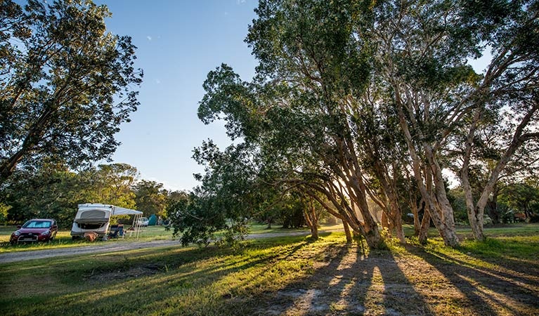 Delicate campground - Coogee Beach Accommodation