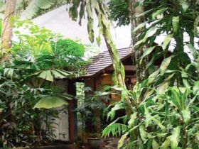 Heritage Lodge and Spa - In the Daintree - Coogee Beach Accommodation