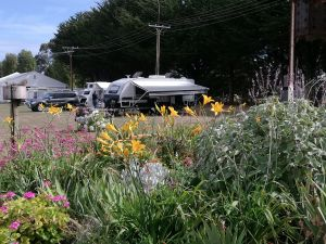 Millicent Showground RV Park - Coogee Beach Accommodation