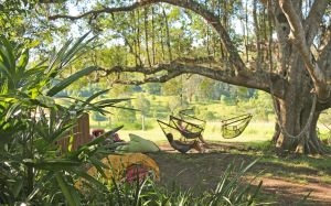 Nimbin Rox YHA - Coogee Beach Accommodation