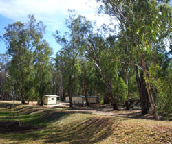Balranald Caravan Park - Coogee Beach Accommodation